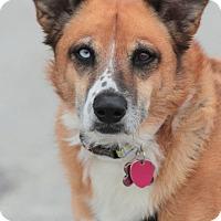 Adopt A Pet :: Sookie - Lafayette, IN