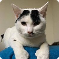 Adopt A Pet :: Paul - Trevose, PA