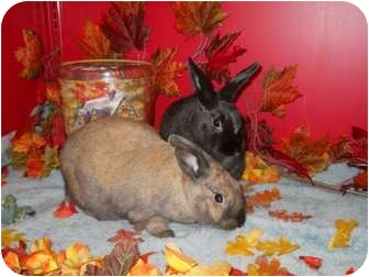 Other/Unknown Mix for adoption in Roseville, California - Hannah & Toodie