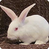 Adopt A Pet :: Cuddles - Williston, FL