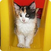Adopt A Pet :: Twitter n Twinke - Brea, CA