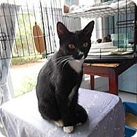 Adopt A Pet :: Lily Mae - CARVER, MA