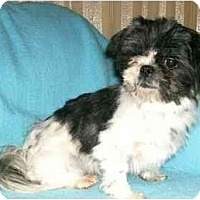 Adopt A Pet :: Mattie - Mooy, AL