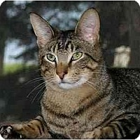 Adopt A Pet :: Travis - Montgomery, IL