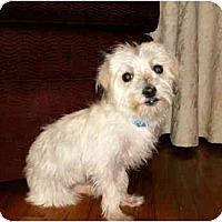 Adopt A Pet :: Lizzie - Mooy, AL