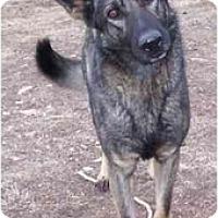 Adopt A Pet :: Tess - Hamilton, MT