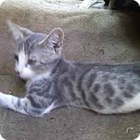 Adopt A Pet :: Dinky - Harrisburg, NC