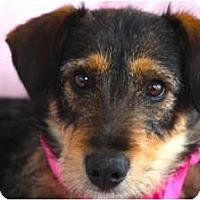 Adopt A Pet :: VALENTINE - san diego, CA