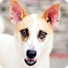 Adopt A Pet :: Duffy