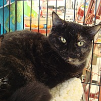 Domestic Shorthair Kitten for adoption in Sacramento, California - Princess M