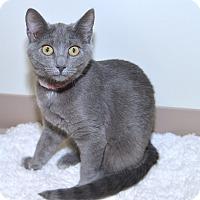 Adopt A Pet :: Lola - Medina, OH