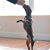 Adopt A Pet :: Hershey - Fresno, CA