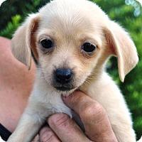 Adopt A Pet :: Tegan - Phoenix, AZ
