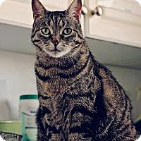 Adopt A Pet :: Granny - Markham, ON