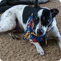 Adopt A Pet :: Pepper - Beavercreek, OH