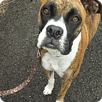 Adopt A Pet :: Delilah - Brentwood, TN