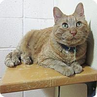 Adopt A Pet :: Maxx - Lakewood, CO