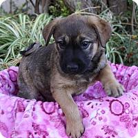 Adopt A Pet :: KISKA - Newport Beach, CA