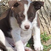 Adopt A Pet :: Sweetness - Broken Arrow, OK