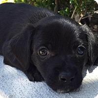 Adopt A Pet :: KYLO - Rancho Cucamonga, CA