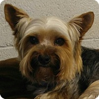 Adopt A Pet :: Brady - Harrisonburg, VA