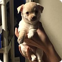 Adopt A Pet :: Sadie - Vacaville, CA