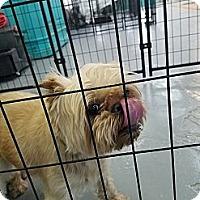 Adopt A Pet :: Edward bonded with Mason - Las Vegas, NV