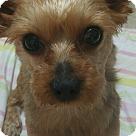 Adopt A Pet :: Sujung