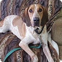Hound (Unknown Type) Dog for adoption in Wilmington, Delaware - Sid