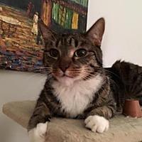 Adopt A Pet :: Austin - New York, NY