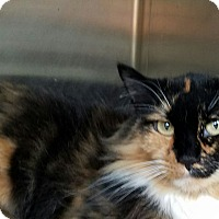 Adopt A Pet :: Kathy - Elyria, OH