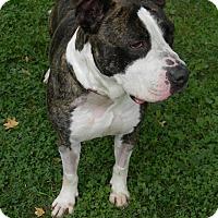 Adopt A Pet :: Enzo - Des Moines, IA