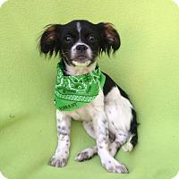 Adopt A Pet :: Forrest - Burbank, CA