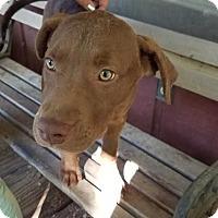 Adopt A Pet :: Lucy (Michelle) - E. Greenwhich, RI