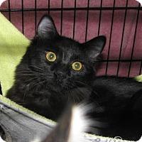 Adopt A Pet :: Pepper - Las Cruces, NM
