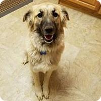 Adopt A Pet :: Sasha - Coldwater, MI