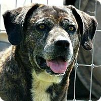 Adopt A Pet :: Gerti - Evans, CO