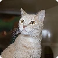 Adopt A Pet :: Camille - Farmingdale, NY