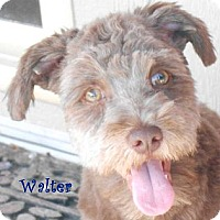 Adopt A Pet :: Walter - Arenas Valley, NM