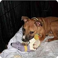 Adopt A Pet :: Spuds - Reisterstown, MD