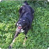 Adopt A Pet :: KOBE - Malibu, CA
