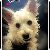 Adopt A Pet :: Sandy - Pascagoula, MS