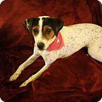 Adopt A Pet :: Terrific Tori! - Pflugerville, TX