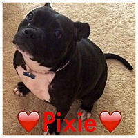Adopt A Pet :: Pixie - Raritan, NJ