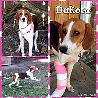 Adopt A Pet :: Dakota - Shaw AFB, SC