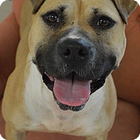 Adopt A Pet :: Ursula - Toledo, OH