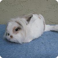 Adopt A Pet :: Kickstand - Bonita, CA