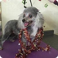Adopt A Pet :: Sassy - Lodi, CA