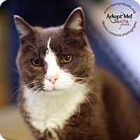 Adopt A Pet :: Marilyn - Lyons, NY