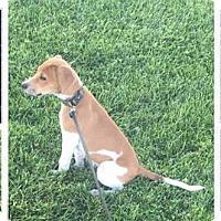 Adopt A Pet :: Landon - Las Vegas, NV